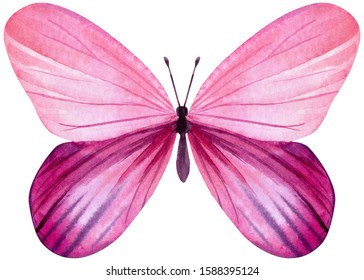 pink butterfly on an isolated white background, watercolor painting