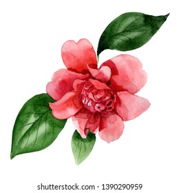 Pink camelia floral botanical flower. Wild spring leaf wildflower isolated. Watercolor background illustration set. Watercolour drawing fashion aquarelle. Isolated camelia illustration element.