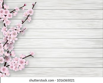 Pink cherry blossom branch on white old wood background. Springtime realistic illustration.