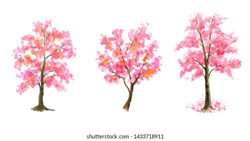 Pink Cherry Blossom tree Set on white isolated background hand painted watercolor painting