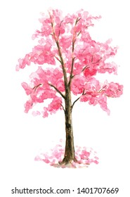 Pink Cherry Blossom tree single Sarura on white isolated background hand painted watercolor painting