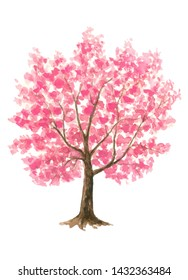 Pink Cherry Blossom tree single Sakura on white isolated background hand painted watercolor painting