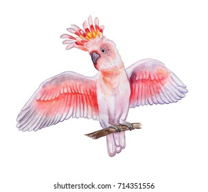 Pink cockatoo isolated on white background. Parrot. Watercolor. Illustration. Template. Picture