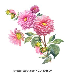 Pink Dahlias  Flowers  . Garland, Watercolor hand painted illustration