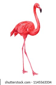 Pink Flamingo drawn in watercolors isolated on a white background hand illustartion