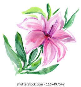 Pink Flower of Hibiscus or Lily isolated. Watercolor illustration