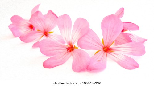 Pink flowers of a geranium on white background, photo manipulation