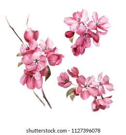 Pink flowers, watercolor, can be used as greeting card, invitation card for wedding, birthday and other holiday and  summer background.