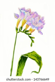 Pink fressia and leaf.Watercolor illustration