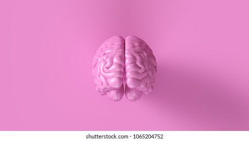 Pink Human brain Anatomical Model 3d illustration
