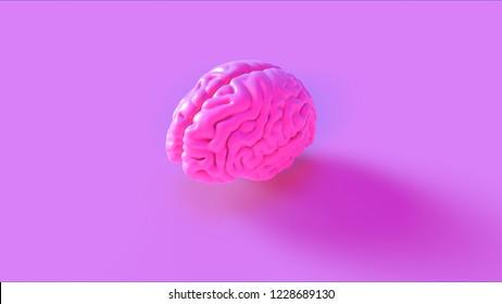 Pink Human brain Anatomical Model 3d illustration 3d rendering