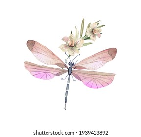 pink insect dragonfly with flowers on white background close up, illustration watercolor hand painted