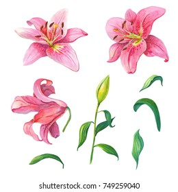 Pink lilies.Floral set.Watercolor  flowers on a white background.Illustration.Design element for scrapbooking, Invitations,greeting card,books and journals, decoupage,weddings, birthdays.