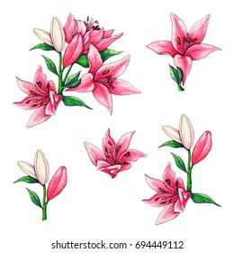 Pink Lilium Set
