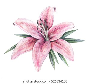 Lily Drawing Images, Stock Photos & Vectors   Shutterstock