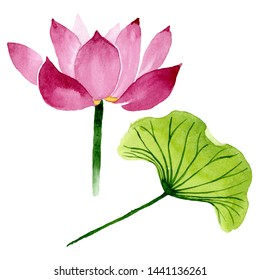 Pink lotus floral botanical flowers. Wild spring leaf wildflower. Watercolor background illustration set. Watercolour drawing fashion aquarelle. Isolated nelumbo illustration element.