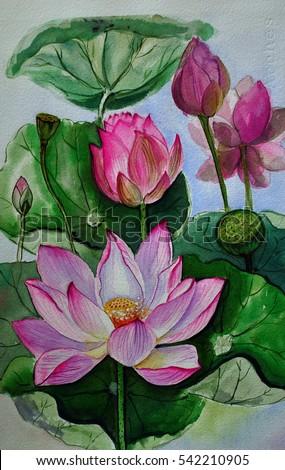 Pink lotus flower hand drawn watercolor stock illustration 542210905 pink lotus flower hand drawn watercolor painting on paperbanana mightylinksfo