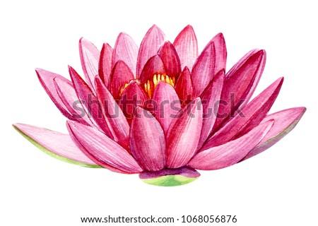 Royalty free stock illustration of pink lotus flower watercolor pink lotus flower watercolor illustration hand drawing flora wedding mightylinksfo