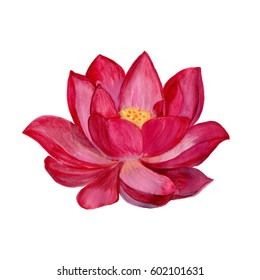 pink lotus watercolor illustration isolated on a white background. Element for design