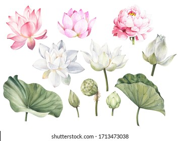 Pink lotus white lotus and leaves hand drawn watercolor set