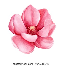 Magnolia Blossom Images Stock Photos Vectors Shutterstock