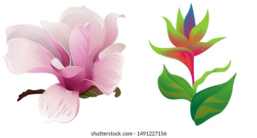 Pink Magnolia. Green bird of paradise. Illustration. Isolated illustration element. Floral botanical flower. Wild leaf wildflower isolated. Exotic tropical hawaiian jungle.