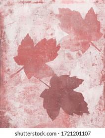 Pink Mapple leaf vegetal art print