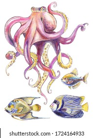 Pink octopus and tropical fish - colored pencils illustration