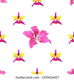 Pink Orchid. Pink Bauhinia Purpurea. Illustration. Seamless background pattern. Floral botanical flower. Wild leaf wildflower isolated. Exotic tropical hawaiian jungle. Fabric wallpaper print texture.