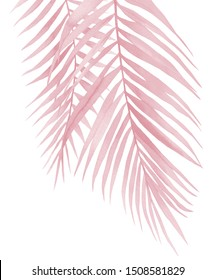 Pink palm leaves. Coconut branches. Blush pink watercolour illustration on white.