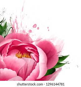 Pink peony in the corner of the sheet with place for text. Close-up on white background with paint splashes