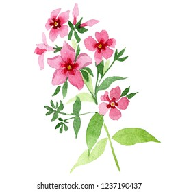Pink phlox flowers with green leaves. Floral botanical flower. Isolated phlox illustration element. Wild spring leaf wildflower isolated. Watercolor background illustration set.