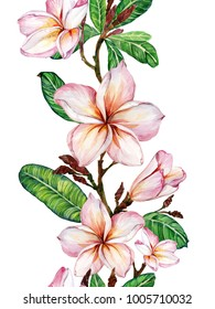 Pink plumeria flower on a twig. Border illustration. Seamless floral pattern. Isolated on white background.  Watercolor painting. Hand drawn.