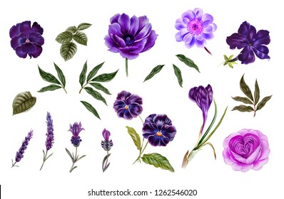 pink and purple flowers. watercolor flowers. Peony branch. Rose branch. leaves isolated.
