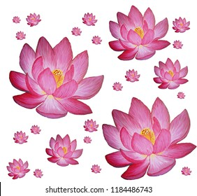 Pink Purple Lotus Flower Background Pattern