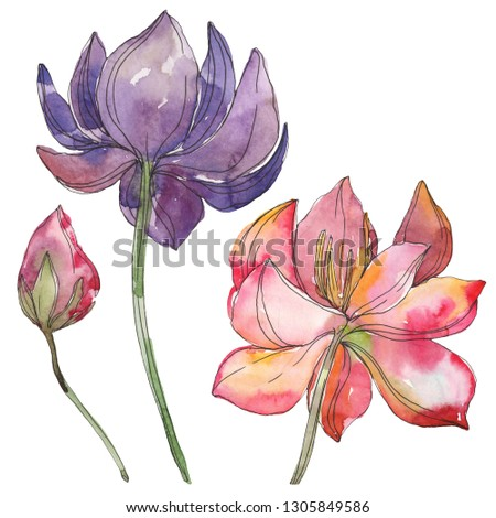 Pink Purple Lotus Foral Botanical Flower Stock Illustration