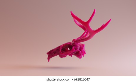Pink Rabbit Skull with Antlers forming the mythical creature the Jackalope / 3D illustration / 3D rendering - skull scan is from SCSU VizLab - www.thingiverse.com/scsuvizlab/about - (CC Attribution)