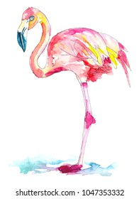 Pink, red, and yellow feathered flamingo with white and blue beak is standing in blue water.