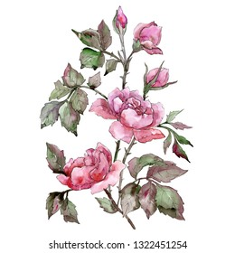 Pink rose bouquet floral botanical flower. Wild spring leaf wildflower. Watercolor background illustration set. Watercolour drawing fashion aquarelle. Isolated roses illustration element.