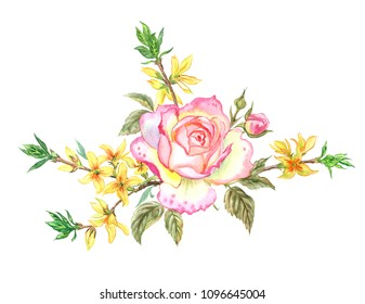 Pink rose  and branches of forsythia, watercolor bouquet on a white background, isolated.
