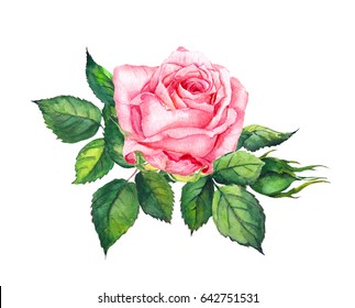 Pink rose with leaves. Watercolor for wedding card