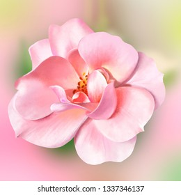 Pink rose on a soft pink background