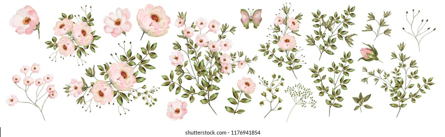 Pink rose.  Watercolor, Botanical illustration.Flower arrangements of pink roses, colorful leaves, wild herbs. A set of bouquets, twigs, floral elements.