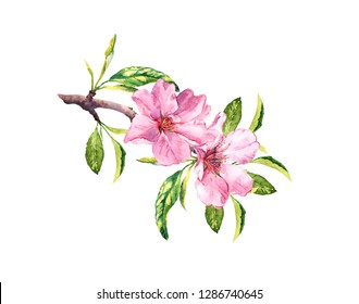 Pink spring flowers. Flowering branch with blossom of cherry, apple, sakura. Watercolor