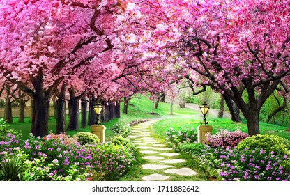 pink tree wallpaper, beautiful forest