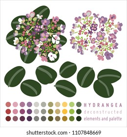 Pink and violet hydrangea flower head with green leaves deconstructed elements and palette samples isolated on white background.