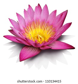 Pink water lily on white background, isolated with clipping path included.