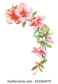 Pink white rose vintage azalea flowers garland wreath isolated on white background. Watercolor colored  pencil  illustration.