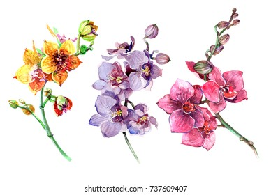 Pink, yellow, purple orchid flowers set. Buds of orchids. A branch of orchids. Watercolor illustration isolated on white background.
