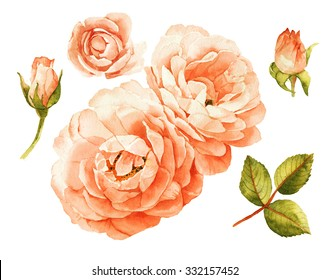 Pink-peach roses watercolor elements